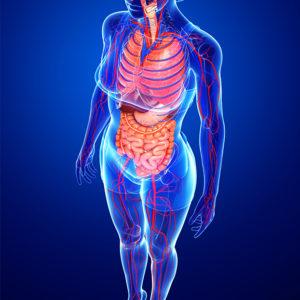 選ばれる理由4 骨盤矯正で深層筋にアプローチする施術